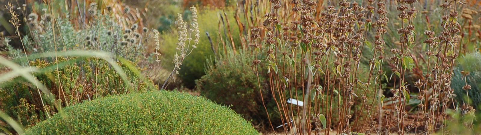 UN CATALOGUE DE PLANTES POUR JARDIN SEC ET NATUREL