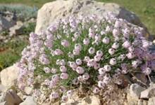 Les plantes de rocailles